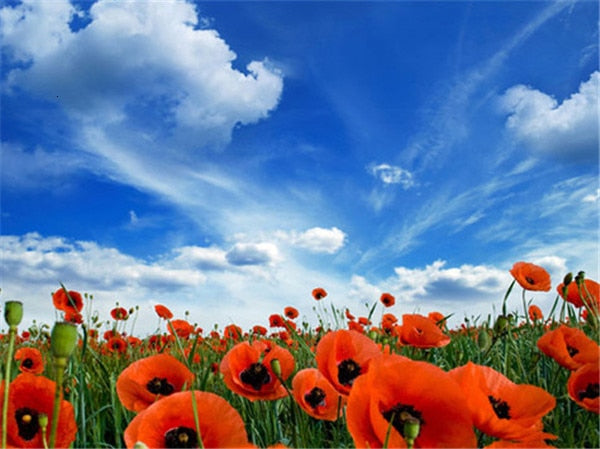 Poppies and Blue Skies - Diamond Painting Kit