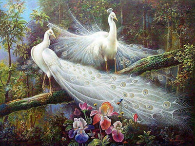 White Peacocks - Diamond Painting Kit