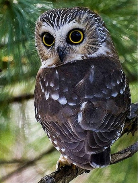 Grey Owl on Branch - Diamond Painting Kit