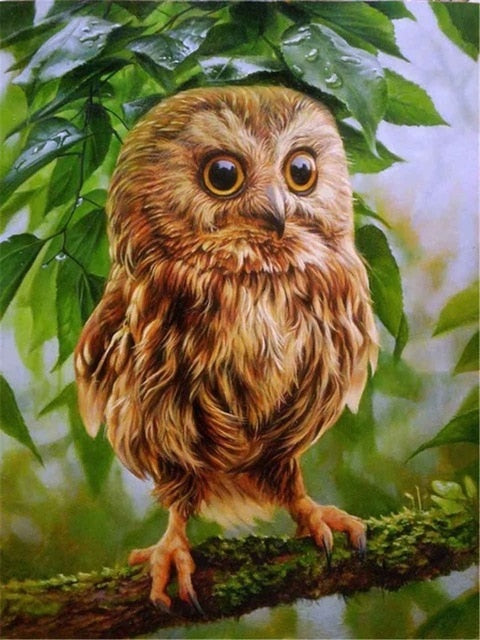 Little Owl on Branch - Diamond Painting Kit