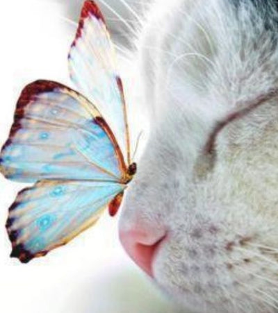 The Cat And The Butterfly - Diamond Painting Kit