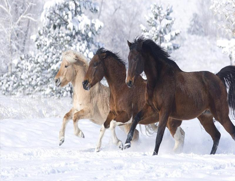 Horses On Snow - Paint By Numbers Kit