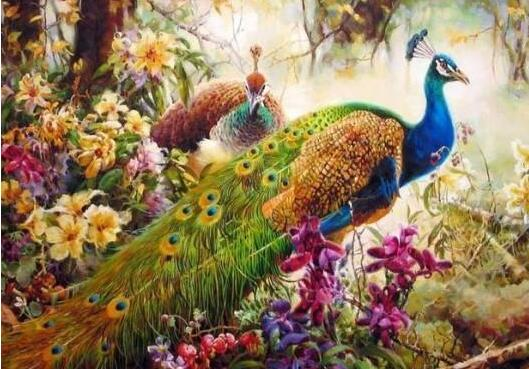 Peacock - Paint By Numbers Kit