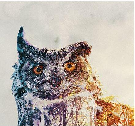 Snow owl - Paint By Numbers Kit