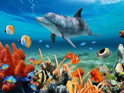 Sea Life Dolphin and Coral - Paint By Numbers Kit
