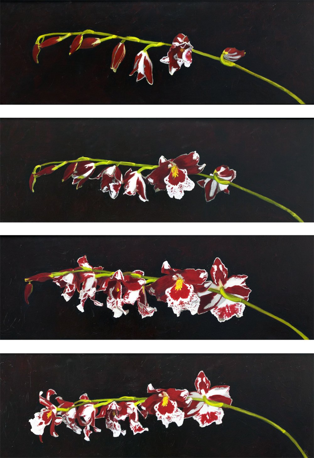 "Red and white Orchids opening by artist Katherine Jeans ""I Will Wait for you"""