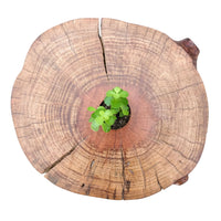 Tree Log Side Table