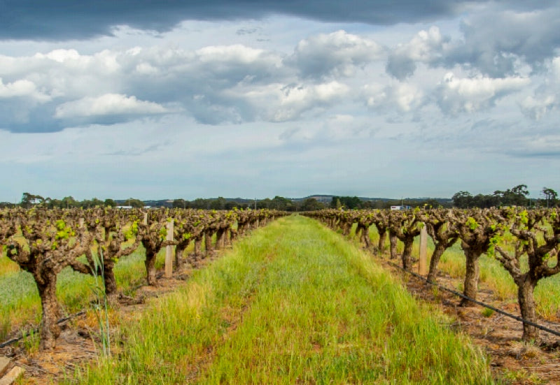 Artisans of Barossa 2018 Grenache Project
