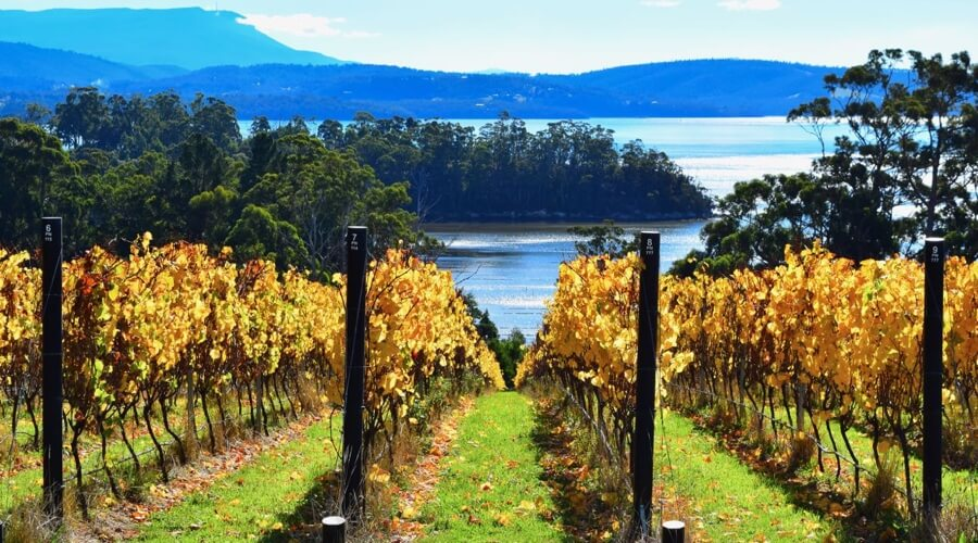 Mewstone Wines: One Of The Best New Wineries Coming Out Of Tasmania