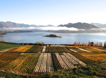 Rippon Vineyard: A Jewel of Central Otago