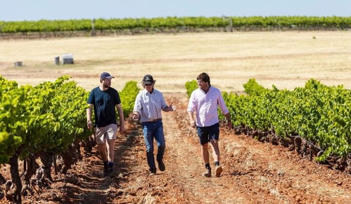 The Koerner boys in their family vineyard