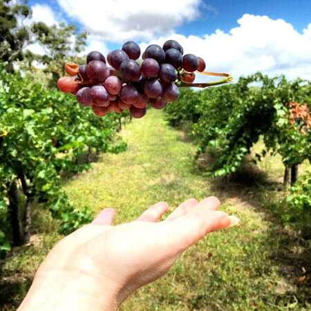 Fruit picking at Aphelion