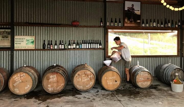 Sholto in the winery