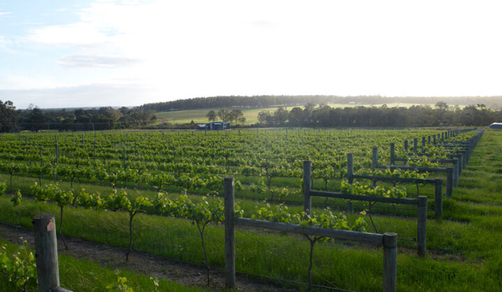 The picturesque Blue Poles vineyard