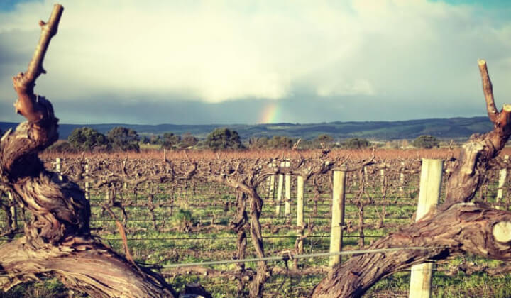 Rainbows over the Omensetter vineyard