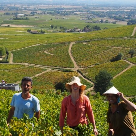 The Chateau Thivin vineyard holdings