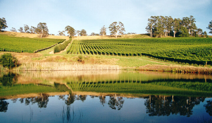 The Clover Hill Tea Tree vineyard
