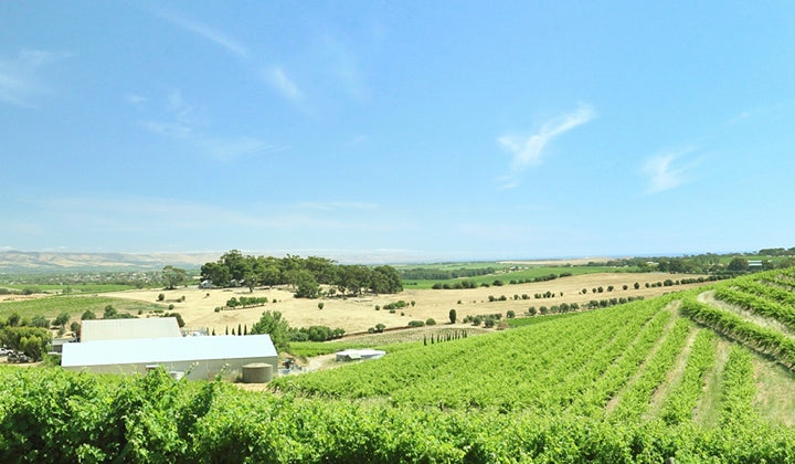 The stunning Coriole vineyard
