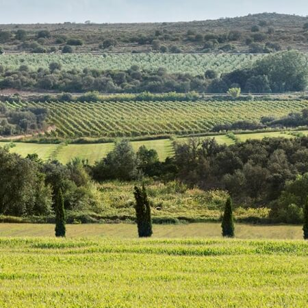 Costers Del Sio vineyards