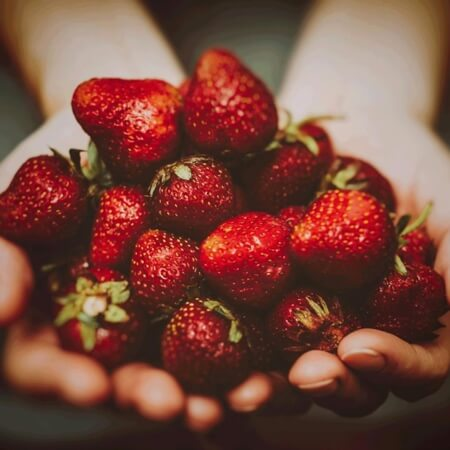 The strawberries used for infusion