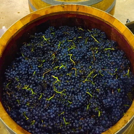 Dappled Pinot Noir fermenting as whole bunches