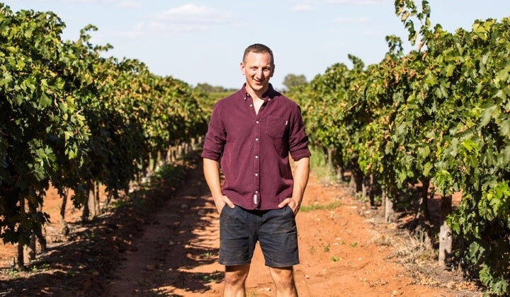 Greg in the vineyard