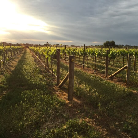 Eldorado Road vineyard