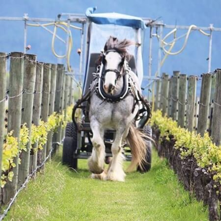 Horse-drawn organic sprays at Fromm