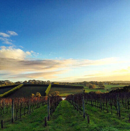 The picturesque Merricks vineyard at sunrise