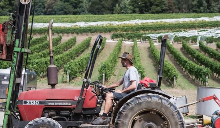 Andrew Marks working the Gembrook Hill vineyard