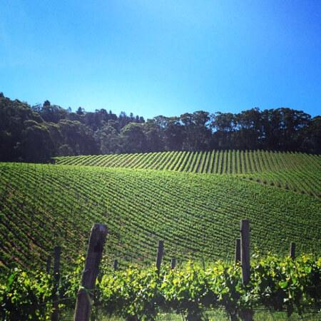 A perfect day on the Scary Gully vineyard