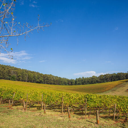 Wombat Creek Vineyard