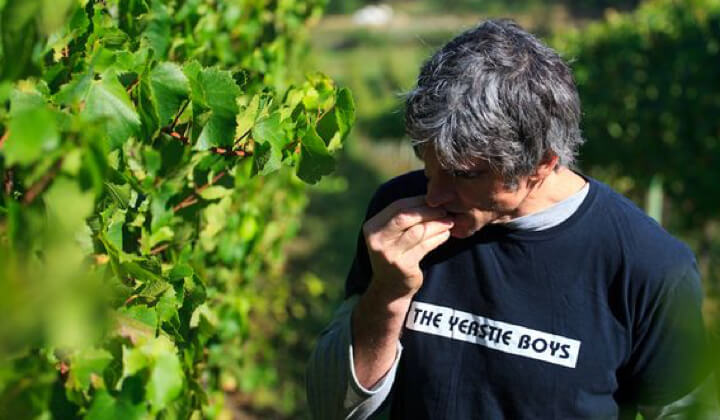 Steve Flamsteed tasting his next vintage
