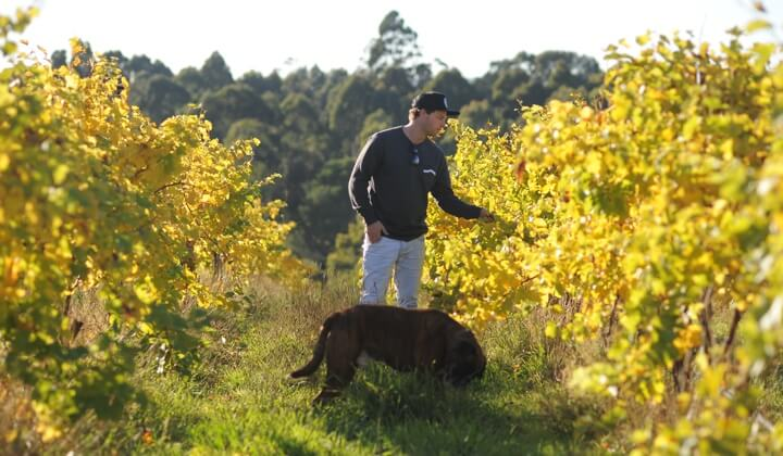 James Hamilton in the family vineyard