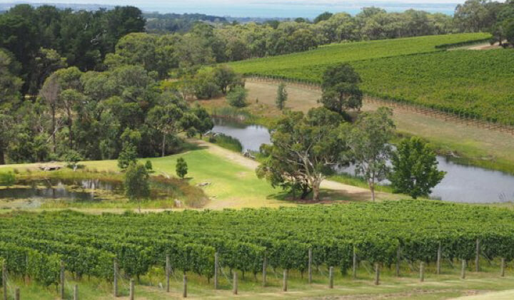 Kooyong Vineyard