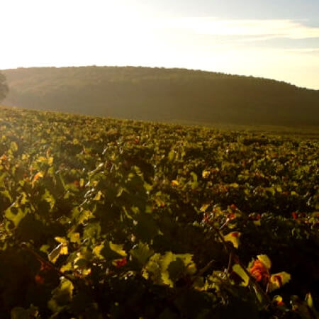 The vineyards of Le Domaine D