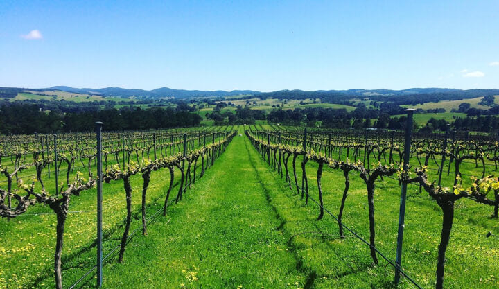 One of the beautiful NSW vineyard Hamish sources from