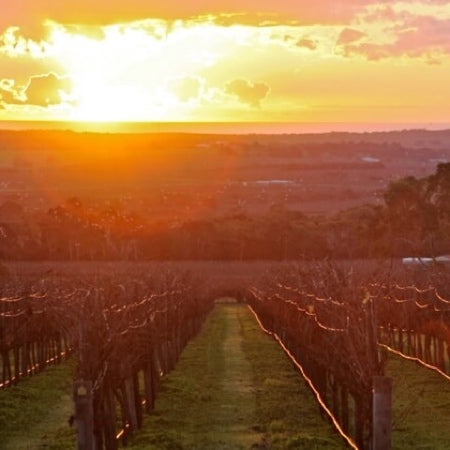 Sunset on Marius vineyard