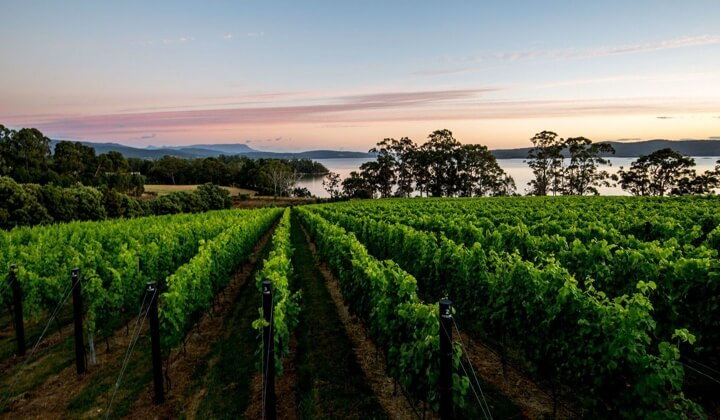 The Mewstone vineyard on the banks of the D'Entrecasteaux Channel