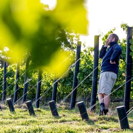 Jonny in the vineyard