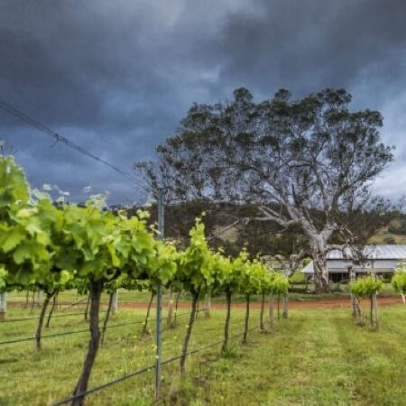 Mount Majura winery