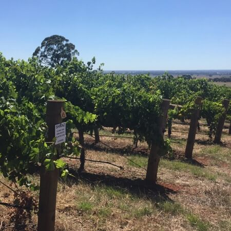 One of the Victorian vineyards Brendan sources fruit from