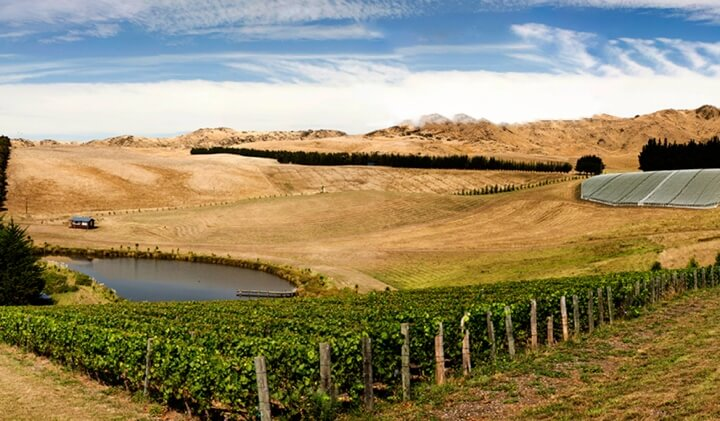The stunning Pyramid Valley Vineyard