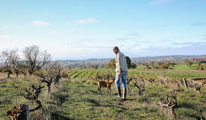 Abel Gibson and hound roaming amongst the vines