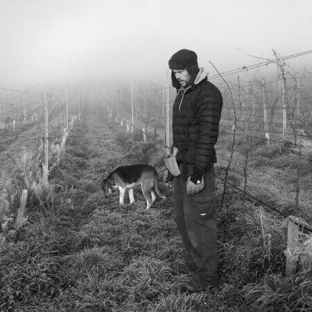 Paul Lipscombe out for an early vineyard stroll
