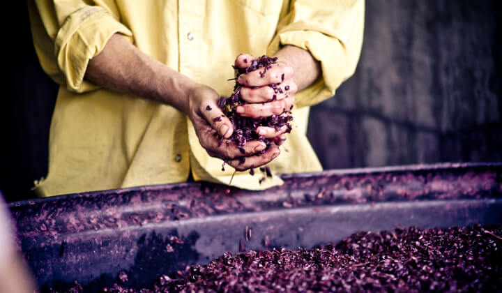Winemaking wizard Justin MacNamee - never afraid of getting his hands dirty