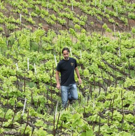 Jonatan in the vineyard