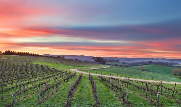 The Lane Vineyard at Sunset