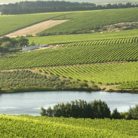 Vondeling vineyards