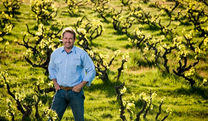Winemaker Peter Fraser amongst the old bush vines